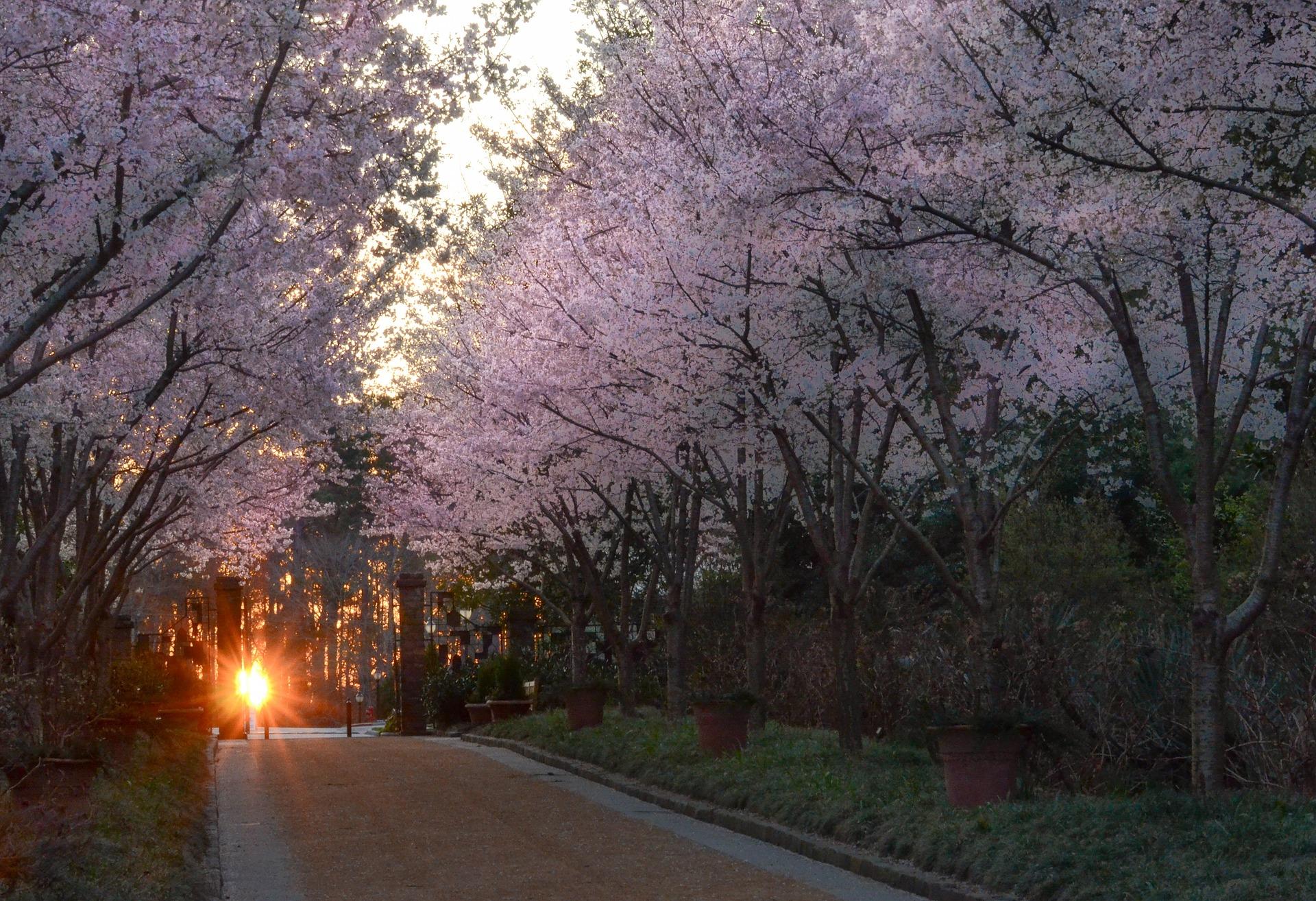 5 Spring Equinox Traditions Around the World